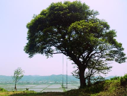 いわき万本桜プロジェクト9