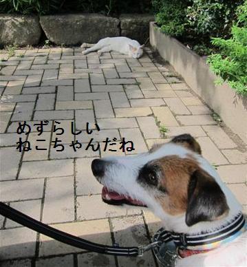taiyaki3.jpg