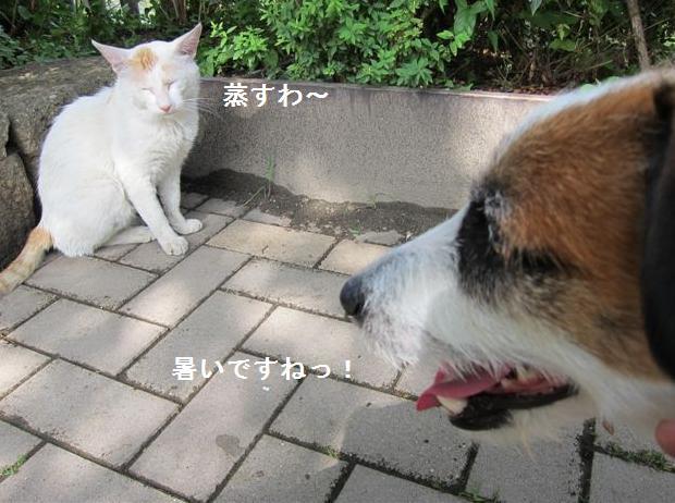taiyaki4.jpg