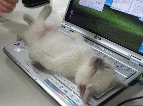 猫が寝てて仕事が手につかない