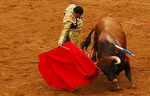 闘牛は赤い布に反応してるわけじゃない