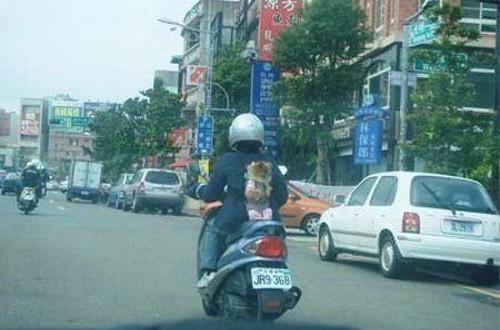 バイクのドライバーが背負っていた意外なモノ