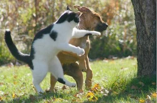 猫にちょっかいを出した結果・・・