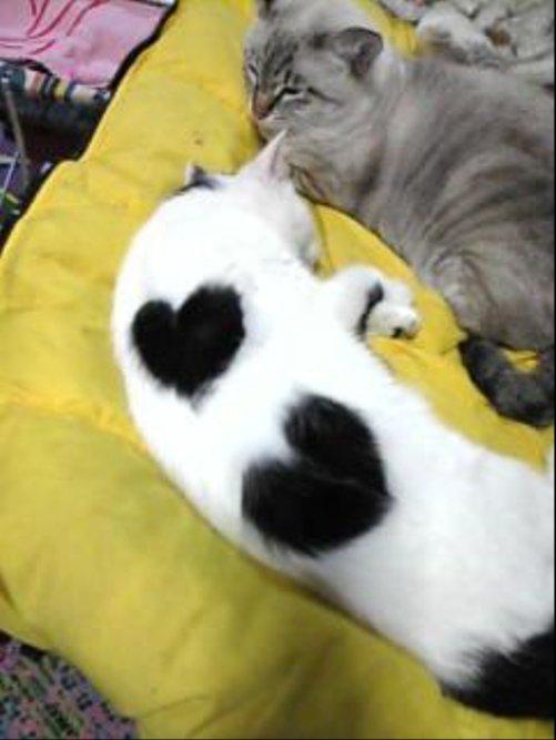 猫が見せた奇跡のハート