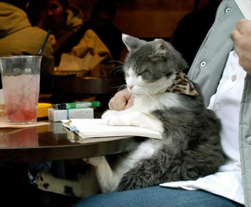 本を読む猫たち