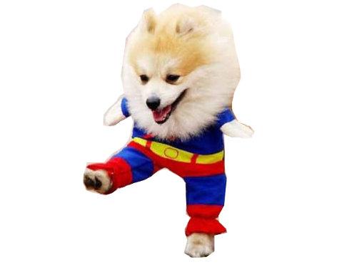 犬のスーパーマンコスプレ