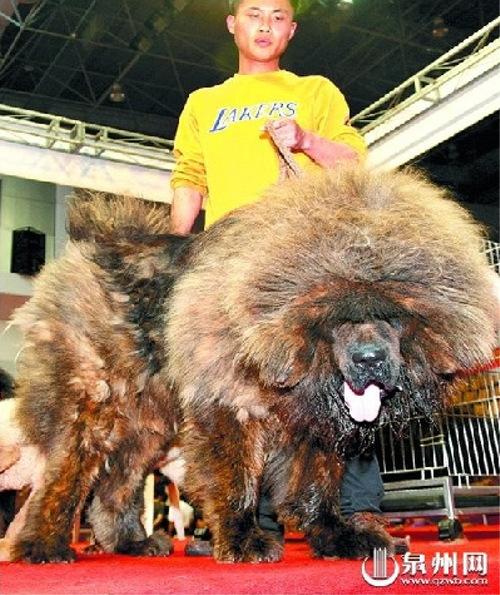 地球上で一番高い価格がついた犬