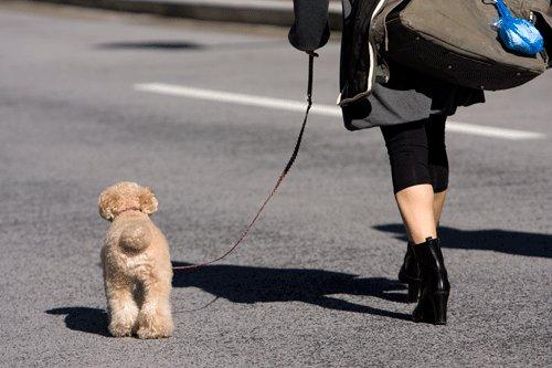 イタリアでは犬を1日3回散歩させないと罰金をとられる