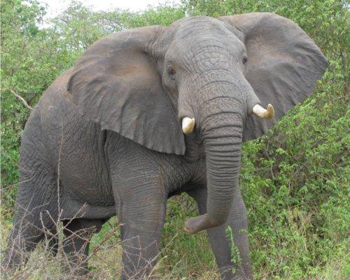 哺乳類で唯一ジャンプできない動物