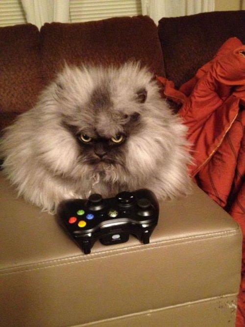 どう見ても怒っているようにしか見えない猫