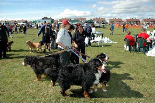 同時に散歩した犬の頭数の世界記録