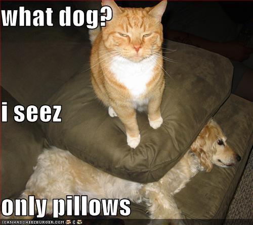 猫に勝てない犬たち