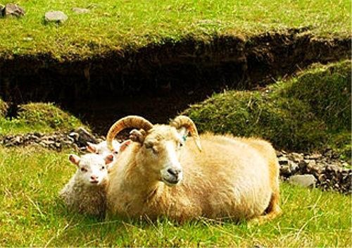 眠れない時に「羊が一匹・・・」と数える理由