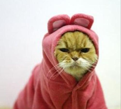 服を着せられてふてくされている猫