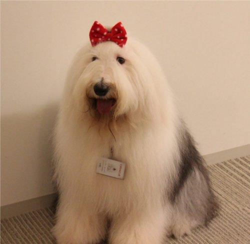 犬を社員として雇っている会社があるって本当?