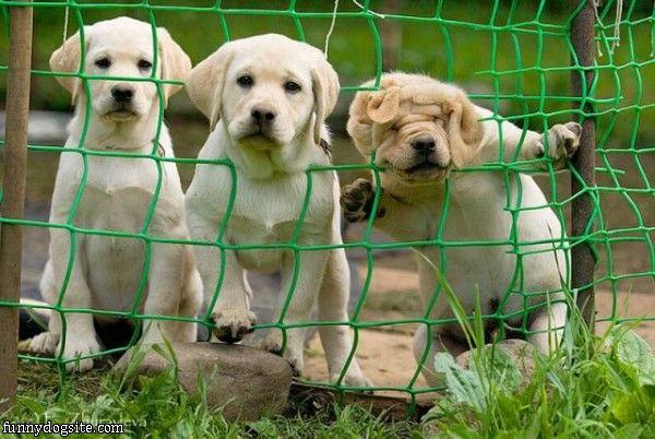顔が網にひっかかってすごい表情になってしまった犬