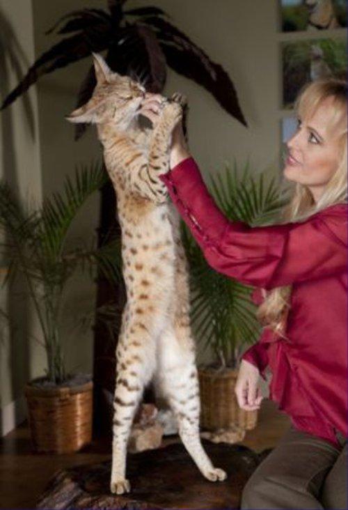 世界一長い猫。その長さは・・・