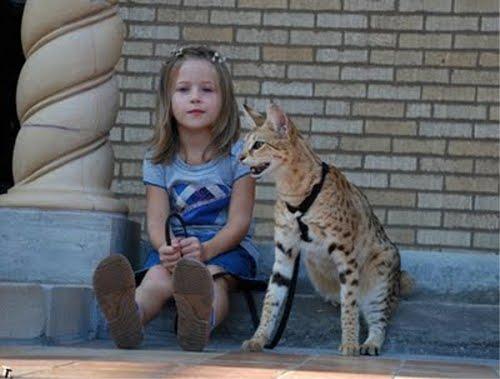 世界一背が高い猫