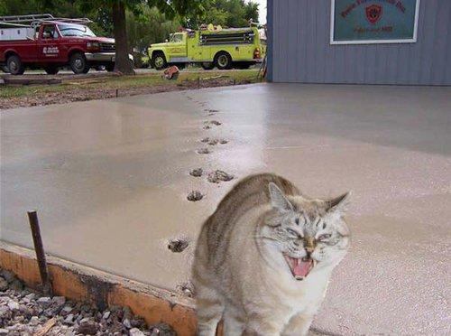 「してやったり!」 猫の表情が悪役そのもの