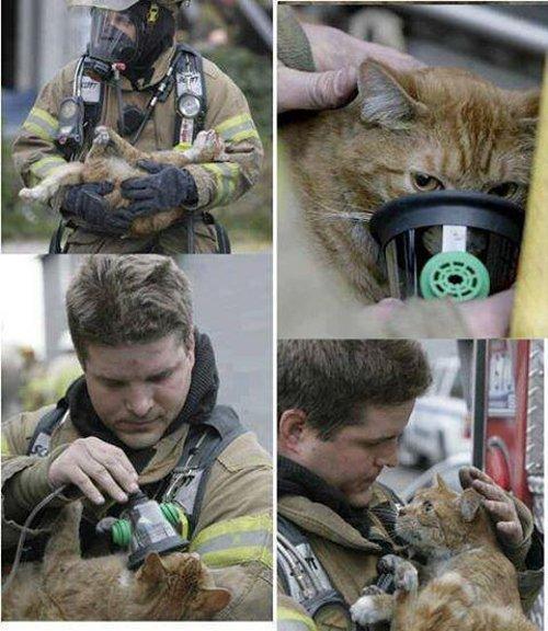 消防士に命を救われた猫