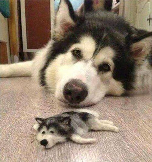 犬の抜け毛で作ったクオリティ高すぎな子犬