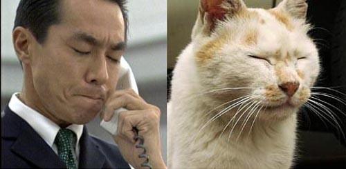室井さんとそっくりだと話題になった猫