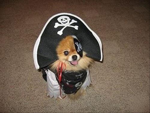 なんだか強くなった気分!海賊になりきった動物たち