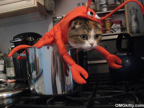 ロブスターになりきった猫