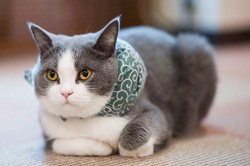 これなら許しちゃう!リアル泥棒猫