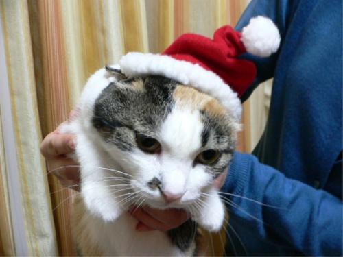 クリスマスなニャンコ