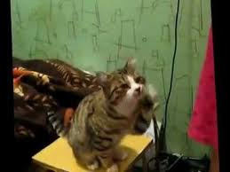 頭を撫でてほしい猫fc2