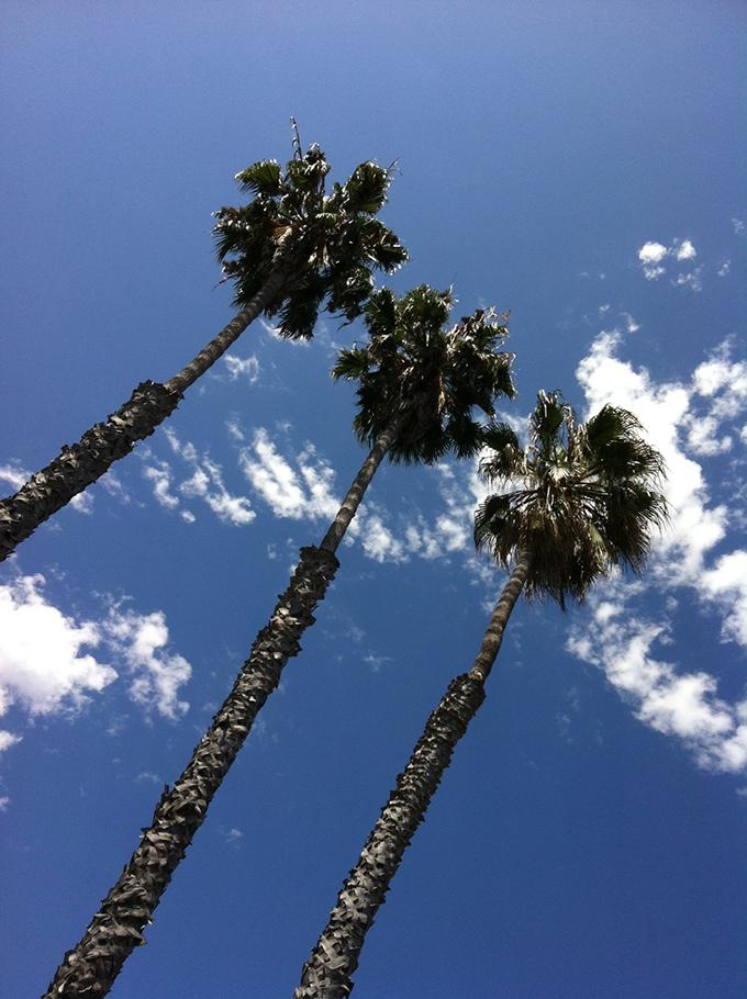 palm sjhdt73
