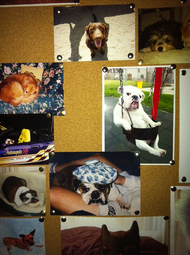 dogspartyboard5674e.jpg