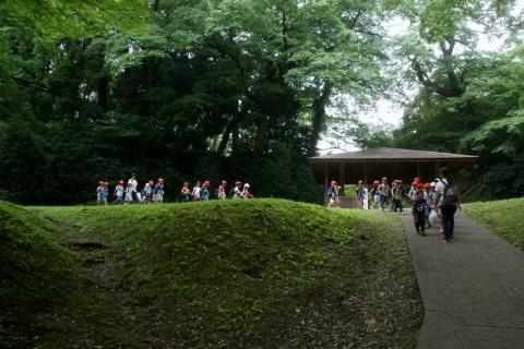 2007-01-24 25年度年長菖蒲見学25年6月25日 006 (800x533)