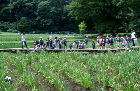 2007-01-24 25年度年長菖蒲見学25年6月25日 031 (800x523)
