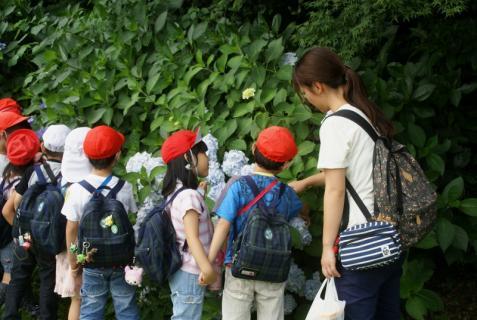 2007-01-24 25年度年長菖蒲見学25年6月25日 059 (800x536)