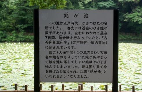 2007-01-24 25年度年長菖蒲見学25年6月25日 079 (800x522)