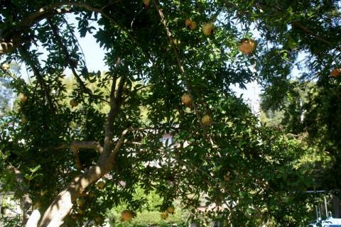 2007-04-19 25年度秋の風景、くるみ割り等 017 (800x533)