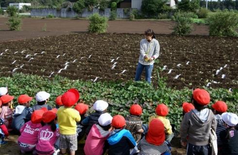 2007-05-24 25年度10月23日芋ほり遠足緑・黄・桃1・誕生会 018 (800x522)