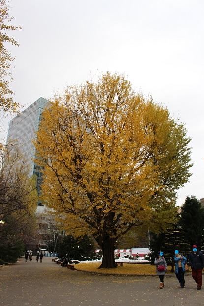 2014北海道旅行:北海道庁 イチョウ