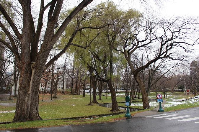 2014北海道旅行:北海道大学 キャンパス