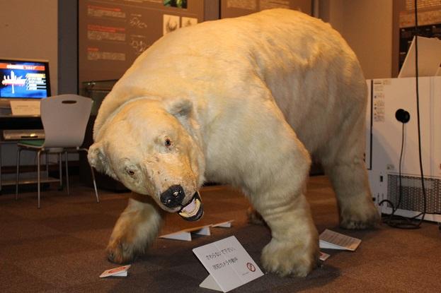 2014北海道旅行:北海道大学 総合博物館 2F シロクマ