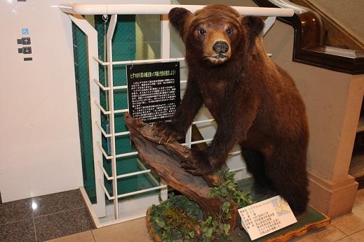 2014北海道旅行:北海道大学 総合博物館 ヒグマ