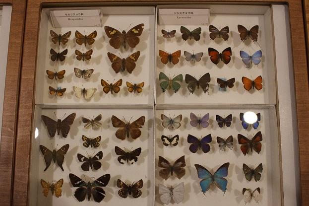 2014北海道旅行:北海道大学 総合博物館 3F チョウ標本