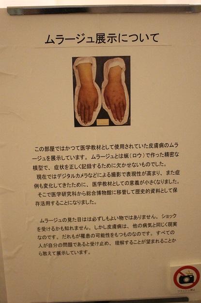 2014北海道旅行:北海道大学 総合博物館 3F ムラージュ展示