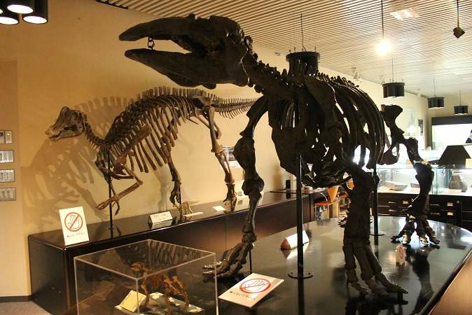 2014北海道旅行:北海道大学 総合博物館 3F 恐竜標本