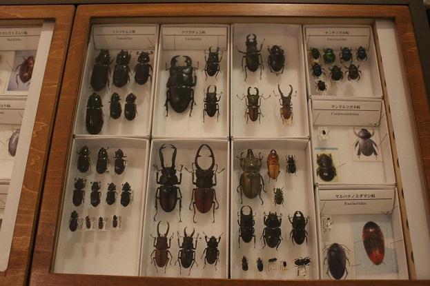 2014北海道旅行:北海道大学 総合博物館 3F 虫標本