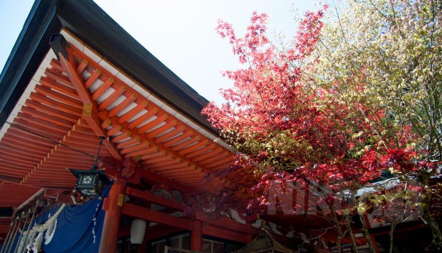 2013 05 03 金桜神社 D3x (27)S