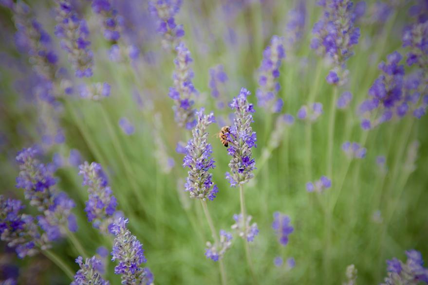2013 07 03 大石公園のハチ (75) S