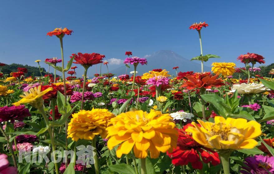 花の都 (9)S